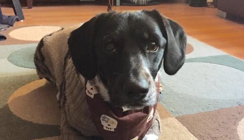 Dexter Our Dog - Our Friend